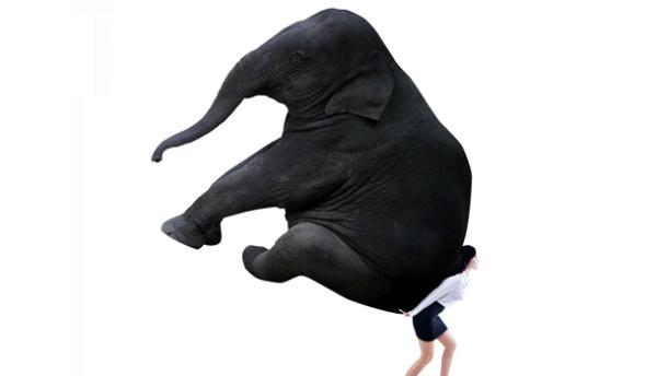 elefante-610x350